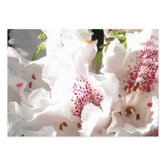 Pink Rhododendron Flower in Cedar Closup 2 Pack Of Chubby Business Cards