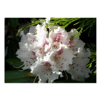 Pink Rhododendron Flower in Cedar Contrast Black 2 Pack Of Chubby Business Cards