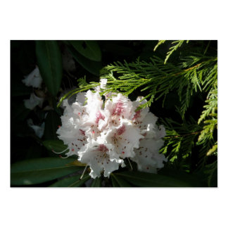Pink Rhododendron Flower in Cedar Contrast Black Pack Of Chubby Business Cards
