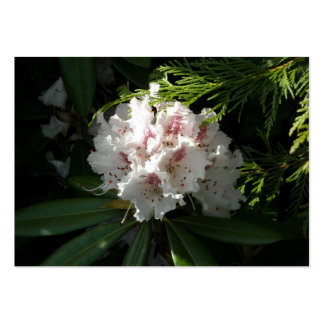 Pink Rhododendron Flower in Cedar Deep Contrast Pack Of Chubby Business Cards