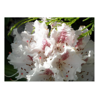 Pink Rhododendron Flower in Cedar n Sunlight Pack Of Chubby Business Cards