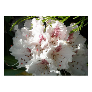 Pink Rhododendron Flower in Cedar Pack Of Chubby Business Cards