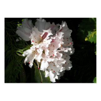 Pink Rhododendron Flower in Contrast Black Pack Of Chubby Business Cards