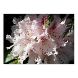 Pink Rhododendron Flower Petal in Contrast 2 Close Pack Of Chubby Business Cards