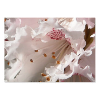 Pink Rhododendron Flower Petal Super Closeup Pack Of Chubby Business Cards