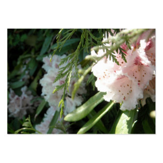 Pink Rhododendron Flowers and Cedar Pack Of Chubby Business Cards