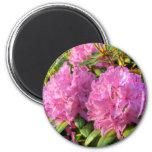 Pink Rhododendron II 6 Cm Round Magnet