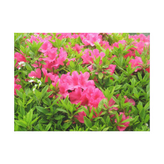 Pink rhododendron spring flower canvas print