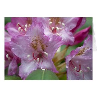 Pink Rhody Card