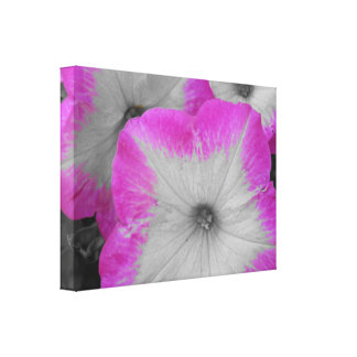 Pink Rimmed black and white petunias Canvas Print