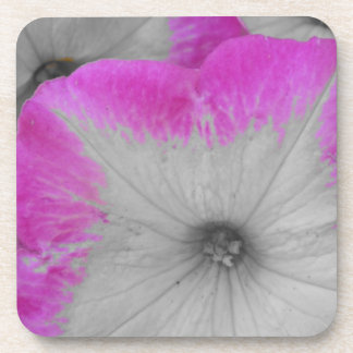 Pink Rimmed black and white petunias Coaster