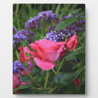 Pink rose and statice in garden display plaque