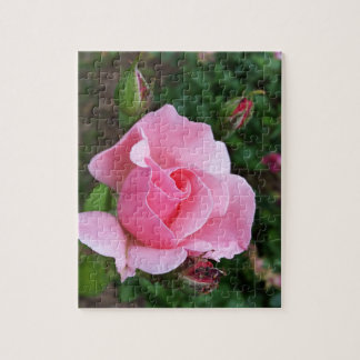pink rose blooming jigsaw puzzle