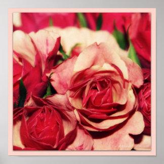 Pink Rose Bouquet Fine Art Photography Print