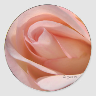 Pink Rose bud curl wedding envelope sticker