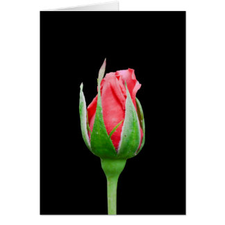 Pink rose bud note card