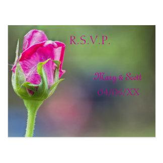 Pink rose bud postcard