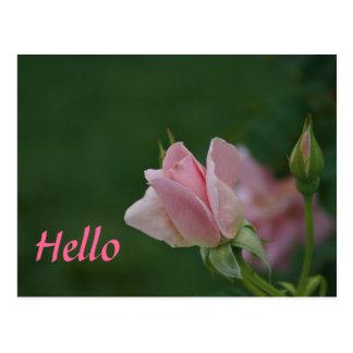 Pink Rose Bud Postcards
