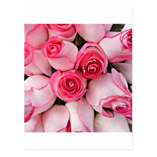 Pink rose buds postcards