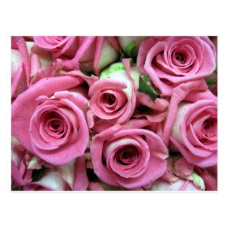 Pink Rose Buds Postcard