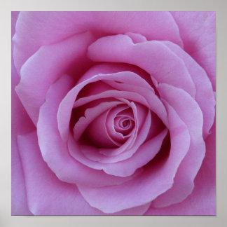 Pink Rose Center Poster