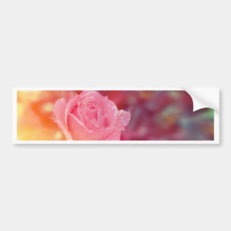 Pink rose covered by morning dew bumper sticker