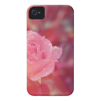 Pink rose covered by morning dew iPhone 4 Case-Mate case