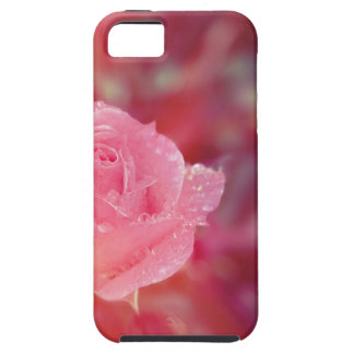 Pink rose covered by morning dew iPhone 5 case