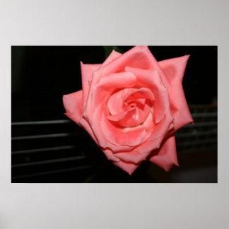 pink rose five string bass strings dark back music print