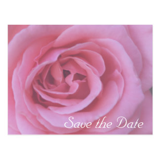 Pink Rose Flower Petals Save the Date Postcard