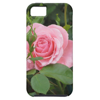 Pink rose flowers with water droplets in spring case for the iPhone 5