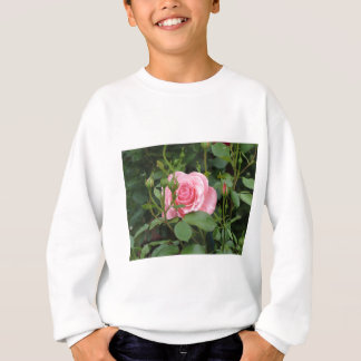 Pink rose flowers with water droplets in spring sweatshirt