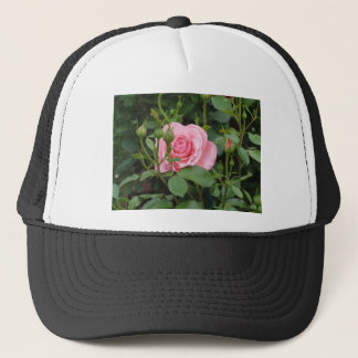 Pink rose flowers with water droplets in spring trucker hat