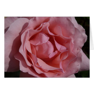 Pink Rose II Pretty Floral Card