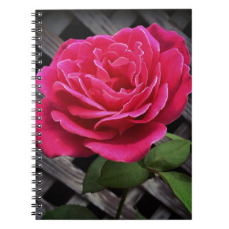 Pink Rose Notebooks