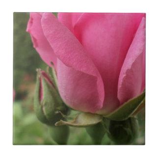 Pink Rose Petal Macro Ceramic Tiles