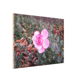 Pink Rose Photo 825 Canvas Print