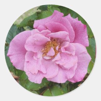 Pink Rose & Raindrops sticker, envelope sealer Round Sticker
