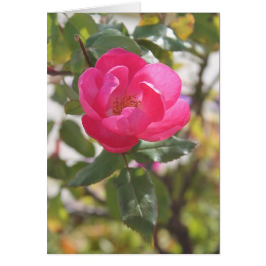 Pink Rose - Special Friendship Card