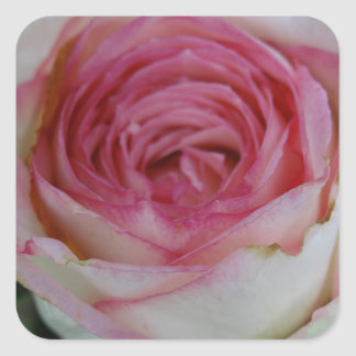 Pink rose square sticker