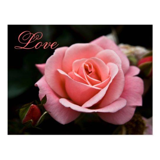 Pink Rose • Valentine's Day Postcard