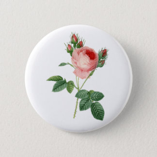 Pink rose vintage botanical illustration 6 cm round badge