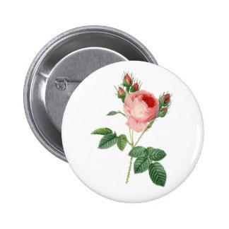 Pink rose vintage botanical illustration 6 cm round badge