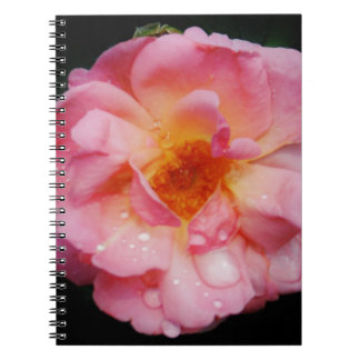 Pink Rose w Dew Drops Black Background Spiral Notebook