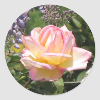 Pink Rose with Purple Wisteria Sticker