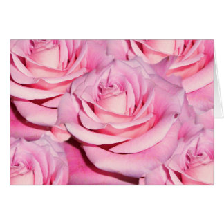 Pink roses blank card