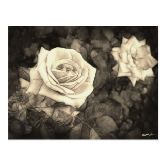 Pink Roses in Anzures 1 Antiqued Postcard