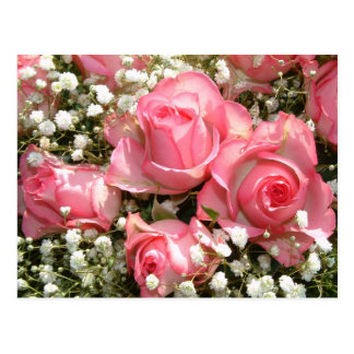 Pink Roses | Post Cards