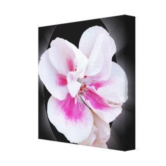 Pink Shades Canvas Print