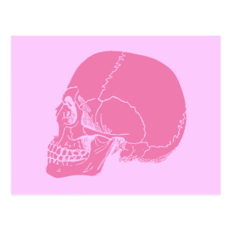 Pink Skull in Profile Postcard
